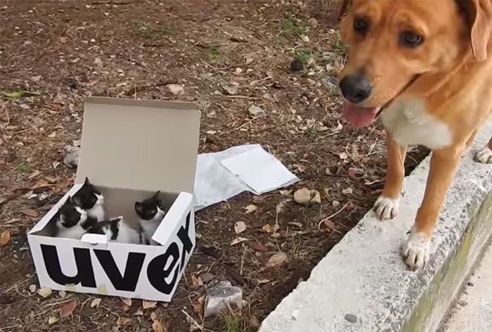 This Dog Lead His Humans To A Mysterios Box In The Mountains, Ended Up Becoming A Father