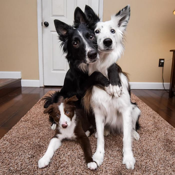"""Famous """"Hugging Dogs"""" Can't Hold Their Excitement About Meeting Their New Baby Brother"""