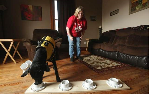 DIABETES ALERT DOGS TO THE RESCUE