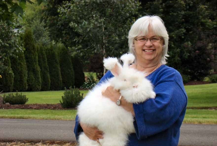 Angora Rabbit | The World's Fluffiest Bunny