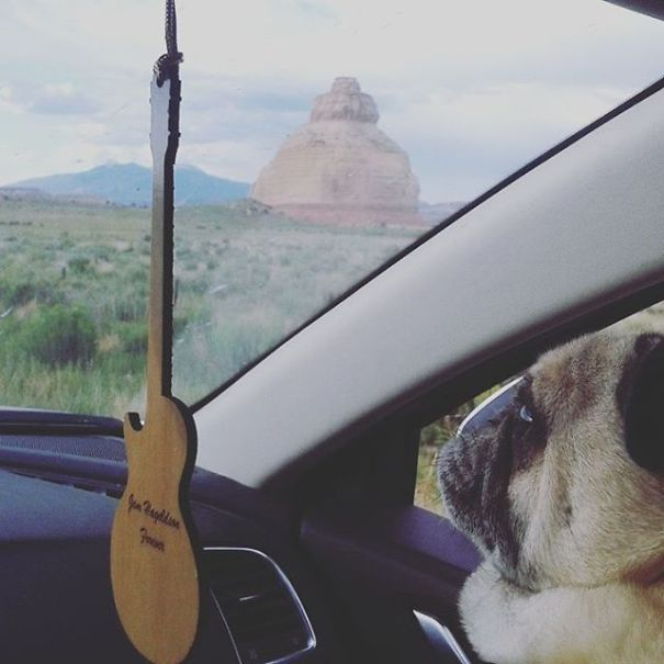 This Deaf Rescue Pug Is Traveling Across America