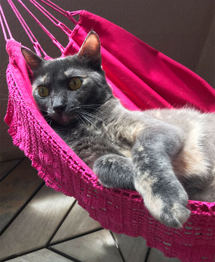 Human Buys His Master Tiny Hammock So They Could Chill Together, Cat Approves It