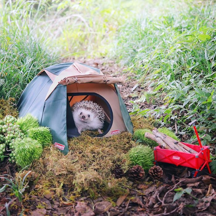 Tiny Hedgehog Goes Camping, And His Pics Are The Best Thing You'll See Today