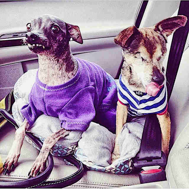 Dogs sitting in car