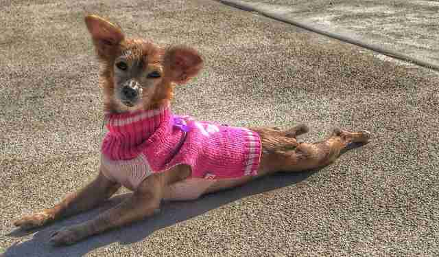 People Send Sweaters To 'Naked' Dog Who Loves To Be Cozy