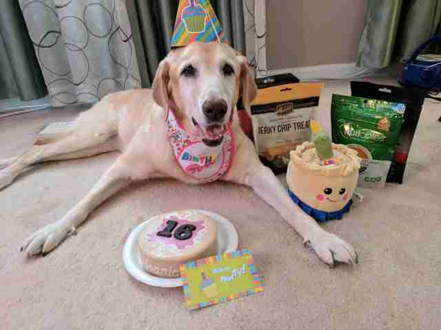 Woman Does The Sweetest Thing For The Senior Dog She Adores