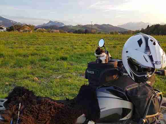 Mogli the adventure cat on the motorbike