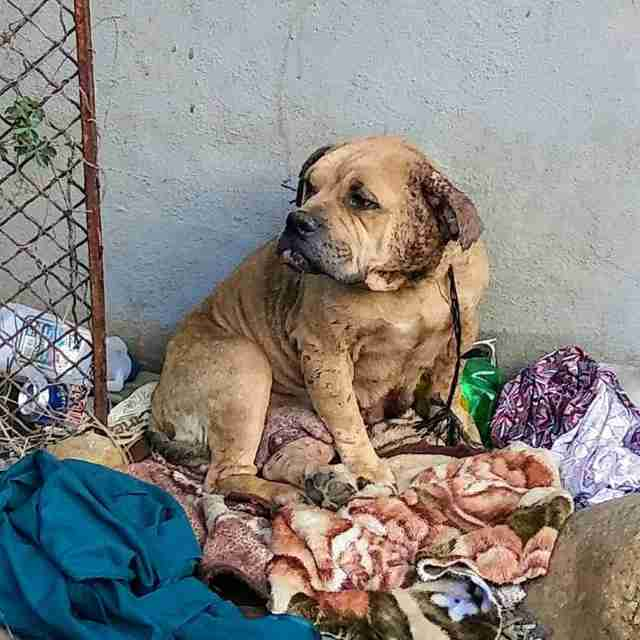 Scared Dog Who Was Living In…