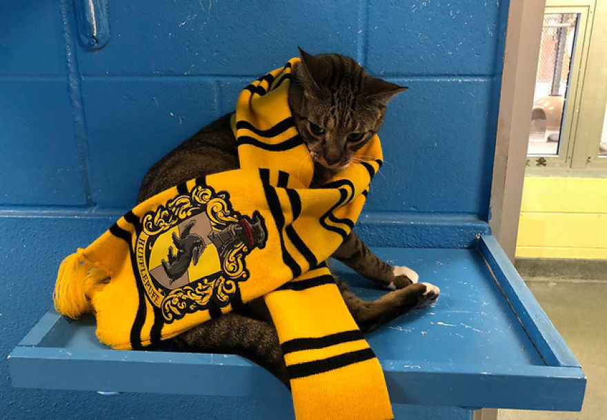 "Animal Shelter Sorts Dogs Into Harry Potter ""Pawgwarts"" Houses To Encourage Adoption Based On Personality Rather Than Breed"