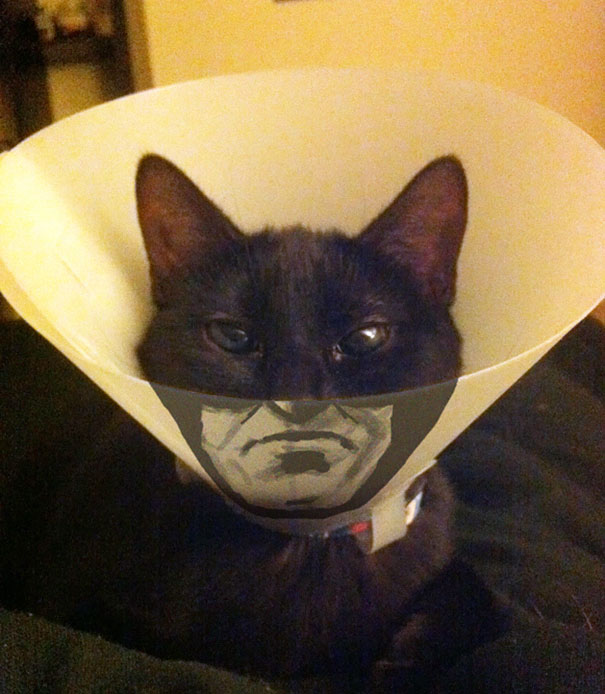 Awesome Pet Cones That Your Pet Will Hate Even More