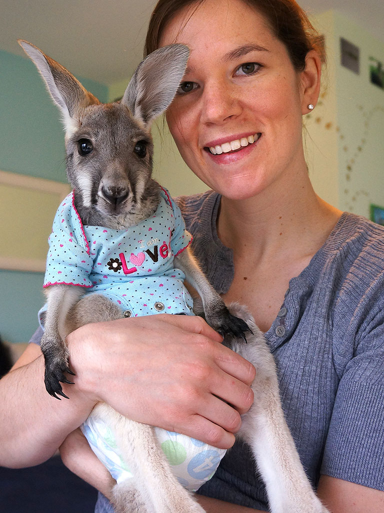 This Might Be the Most Well-Dressed Kangaroo We've Ever Seen