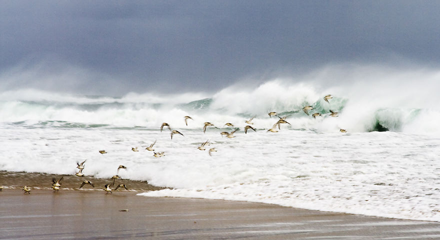 Sable Island Is A Hot-Spot For Migratory Birds