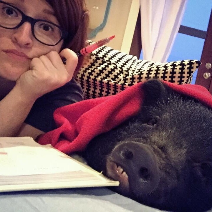 18 Pigs Who Are Too Adorable To Be Real