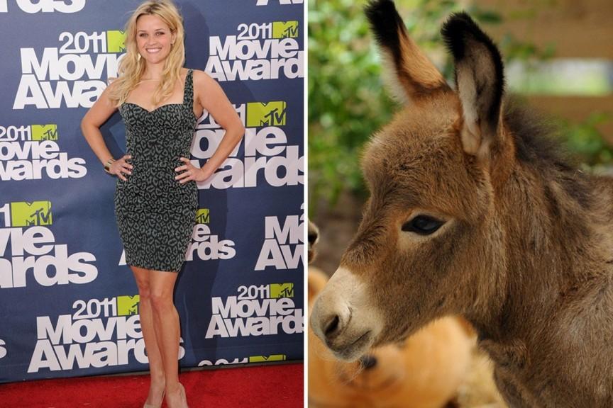 Top 10 Most Famous Celebrity Pets