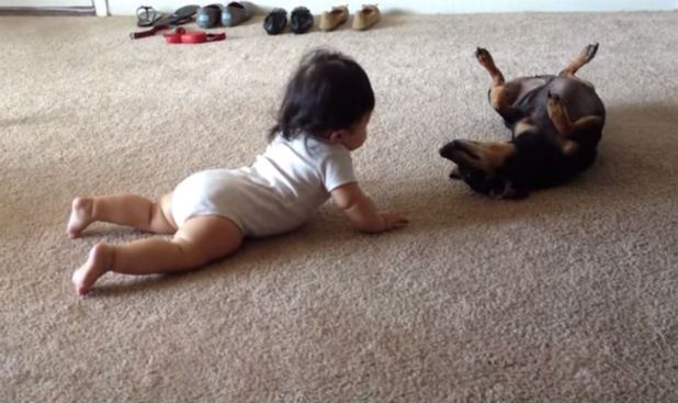 Dog And Baby Meet For The First Time, Pup's World Turns Upside-down