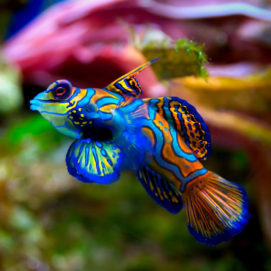 Where to Find Aquarium Fish
