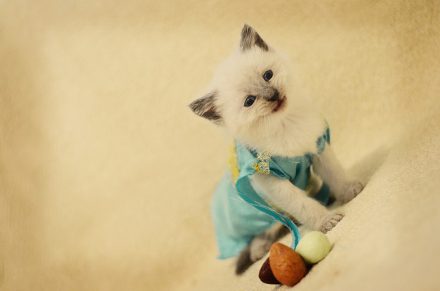 Tiniest Kittens In Fantasy Costumes Will Melt You Heart