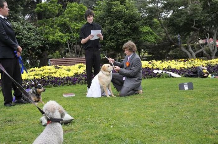 Australian Guy Marries His Dog