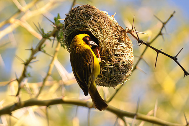 The Most Strangely Beautiful Birds' Nests In The World