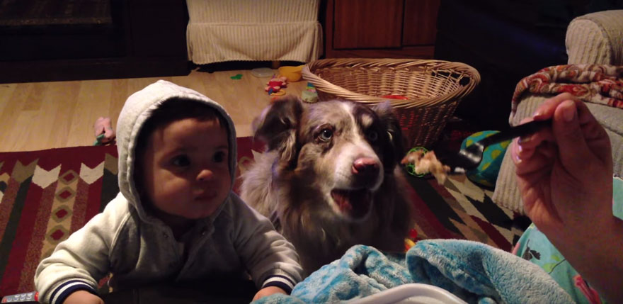 """Mom Offers Baby A Treat If He Says """"Mama,"""" Dog Says It First"""