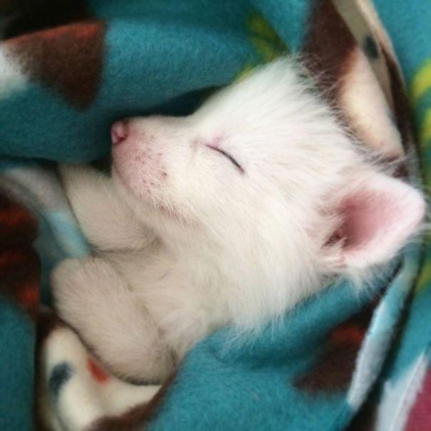 The Sleepiest Pet Ever