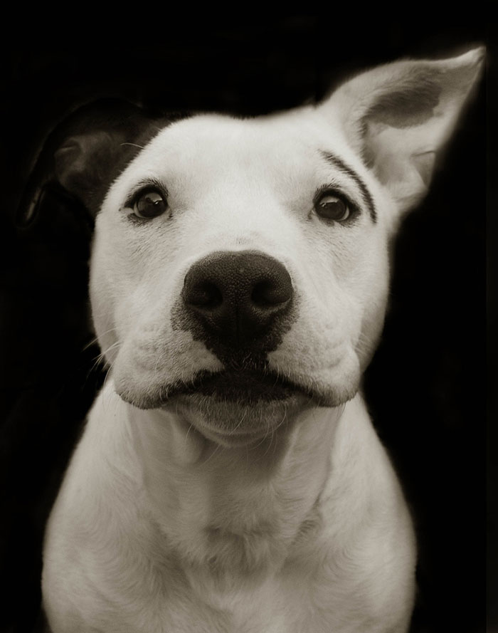 Touching Portraits Of Stray Dogs Waiting To Be Adopted