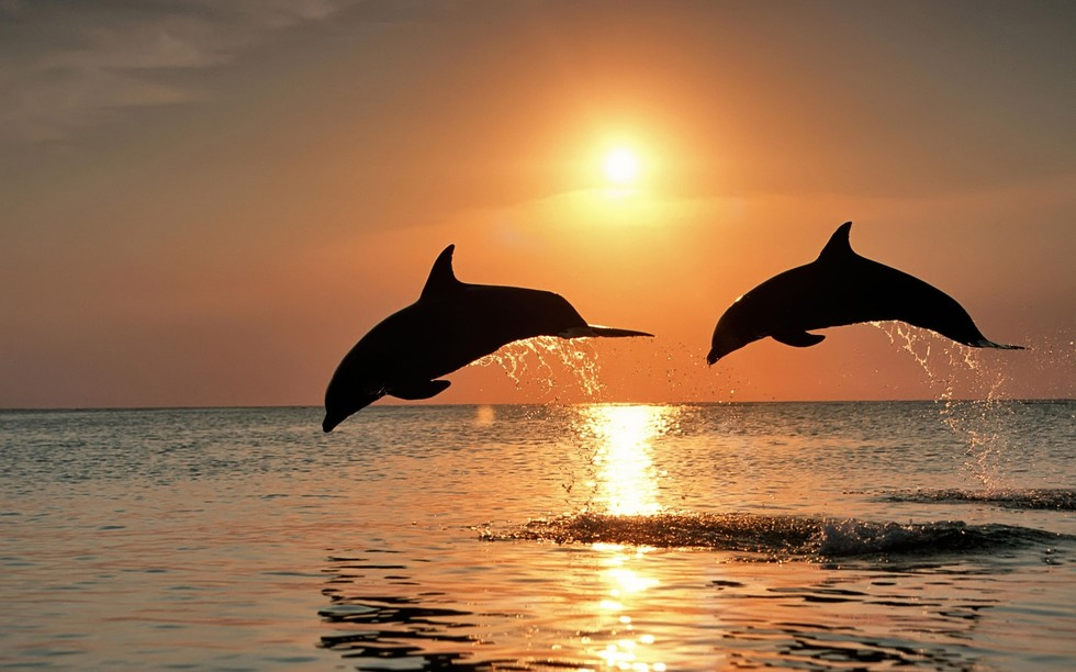 15 Things You (Probably) Didn't Know About Dolphins