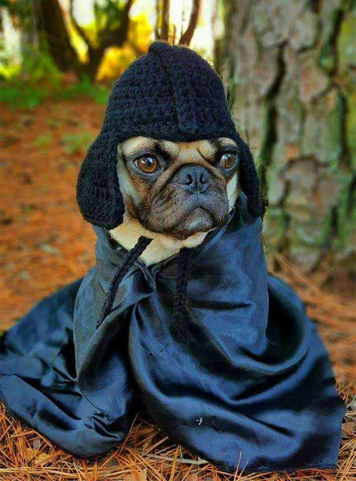 20 Crazy Hats For Lovely Pets