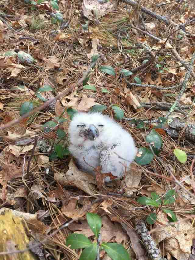 People Do The Nicest Thing For A Baby Owl Who Got Separated From His Family