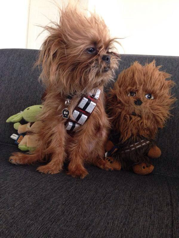 """Dogs Dressed As Your Favorite """"Star Wars"""" Characters"""