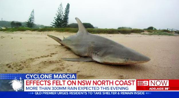 37 Pictures That Prove Australia Is Batshit Insane