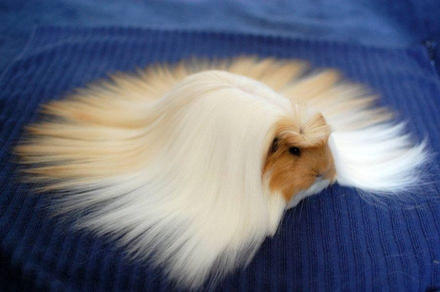 Animals with Amazing Hair