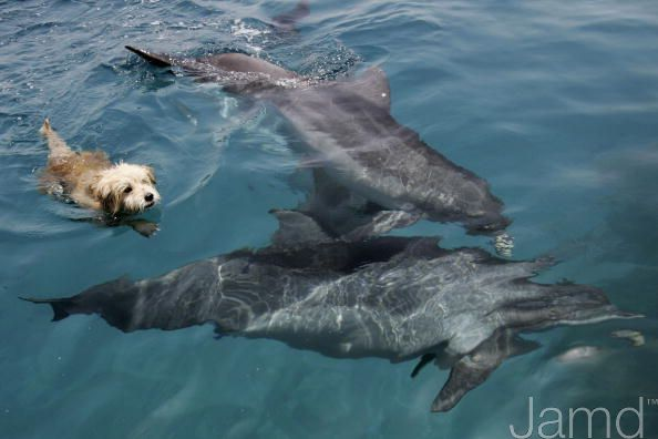 Dog Who Thinks He's A Dolphin