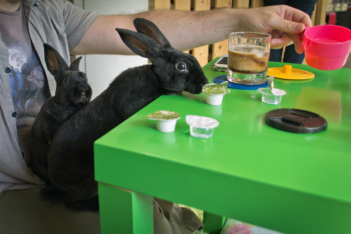 12 Animal Cafes From Around The World