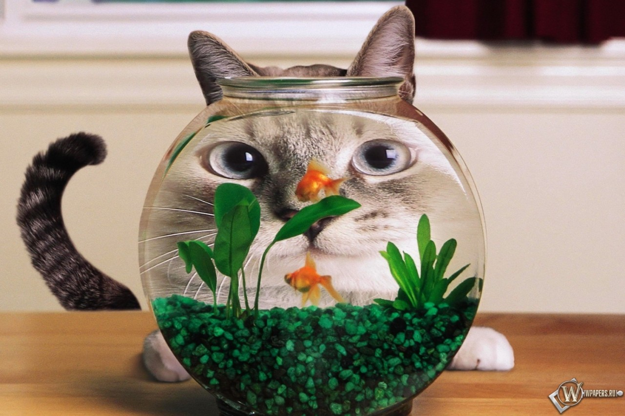 Cat + fish = eternal love