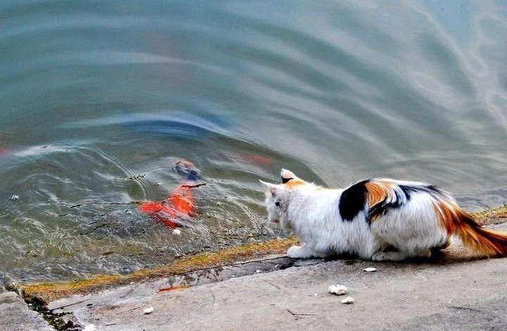 Cat Shows How To Fish