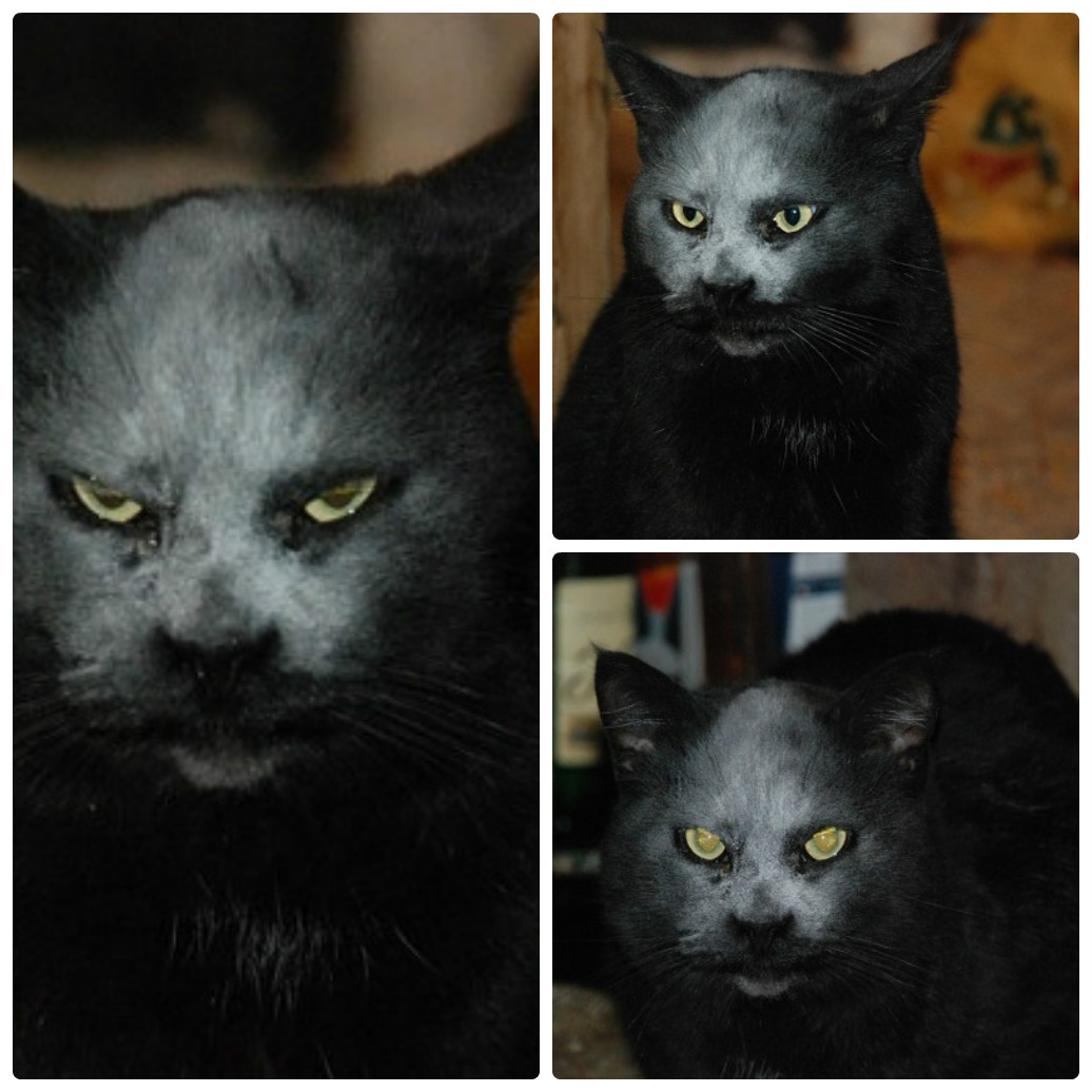 Behold the most demonic black cat ever!