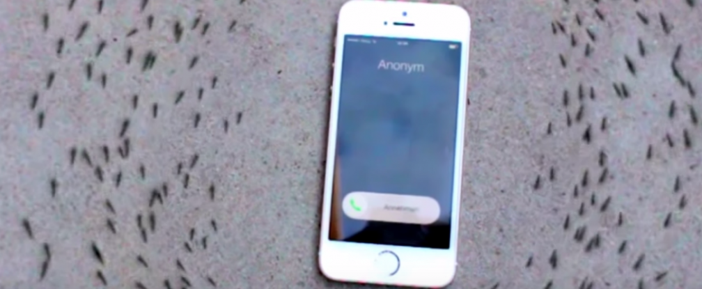 Ants Suddenly March In A Circle When An iPhone Rings
