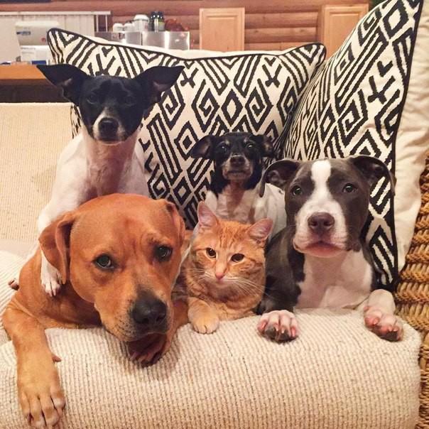 Gorgeous Quintet Of Best Friends