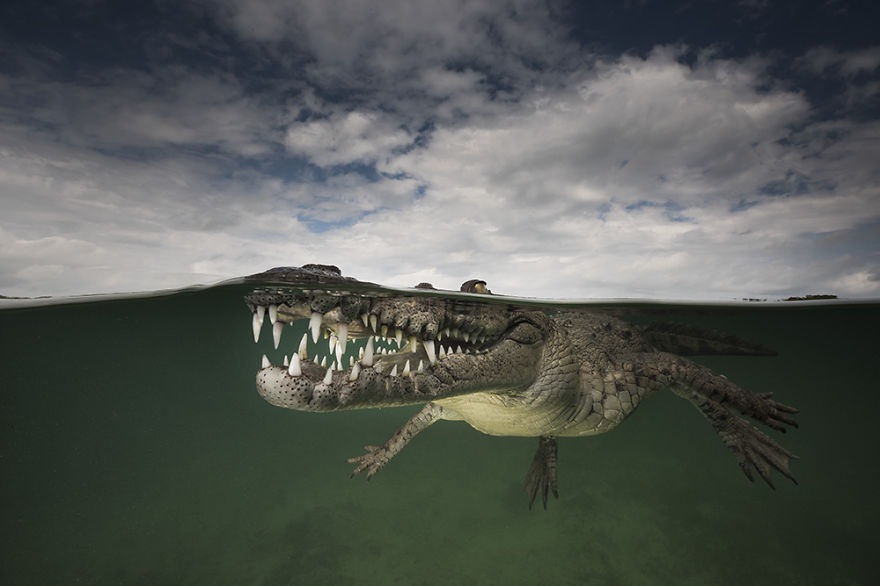 Amazing Half Underwater Images Of Animals Are Like From A Parallel Universe