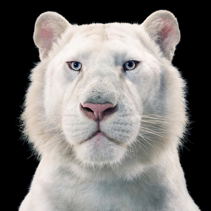 15 Animal Portraits Will Leave You Speechless