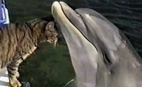 Cat Who Loves To Play With Dolphins