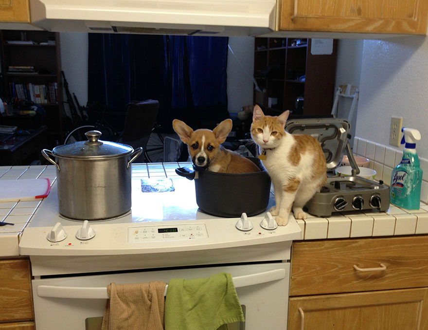 This Corgi And Cat Are Inseparable Friends