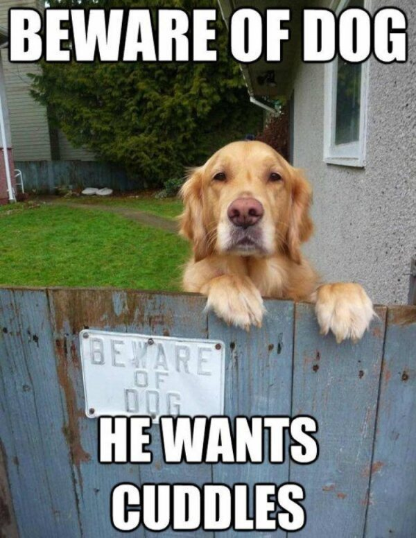 Beware Of Cuddly Dog