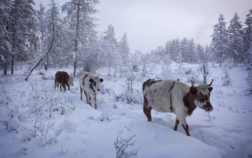 coldest-village-oymyakon-russia-amos-chaple-16