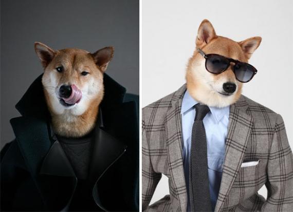 4-Year-Old Dog Model