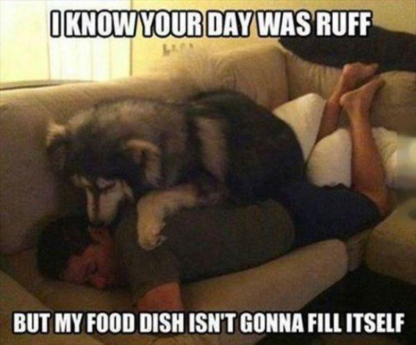 Ruff Day loldog