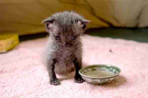 Tiny Kitten Found Crawling O…