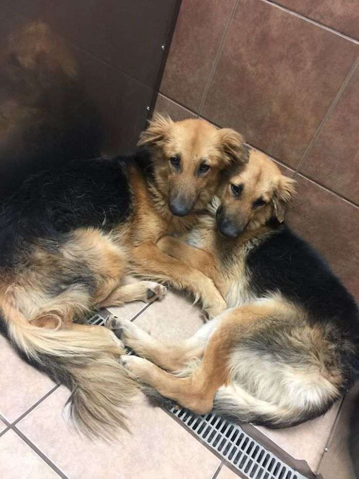 Dogs Abandoned At A High-Kill Shelter Wouldn't Let Go Of Each Other, So Someone Adopted Them Both