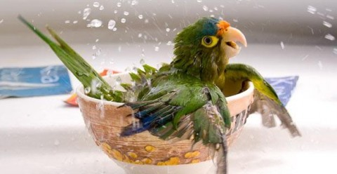 Do Some Pet Birds Bathe Less Than Others